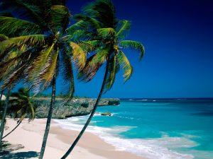 samui-island-coconut-trees